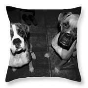 The Cat Did It Throw Pillow by DigiArt Diaries by Vicky B Fuller