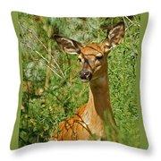 Whitetail Doe Painterly Throw Pillow