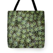 Feild Of Stars  Tote Bag
