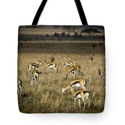 Herd Of Antelope Tote Bag by Darcy Michaelchuk