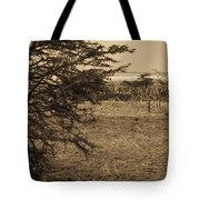 Male Lions Snoozing In Shade Tote Bag