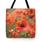 Poppies H Tote Bag