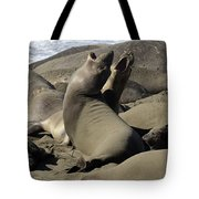Seal Duet Tote Bag by Bob Christopher