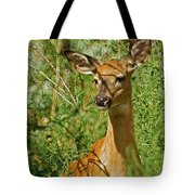 Whitetail Doe Painterly Tote Bag