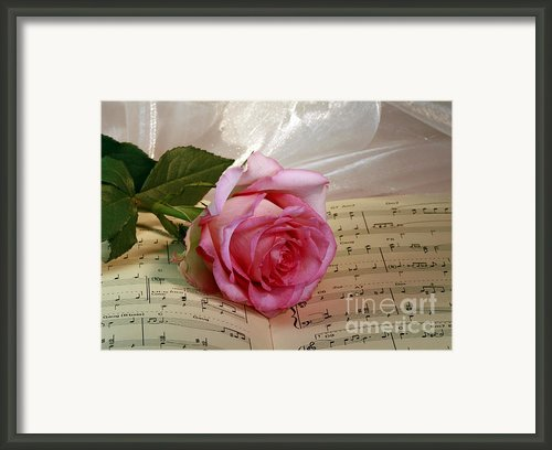 A Tribute To Diana Ross The Rose Framed Print By Inspired Nature Photography By Shelley Myke