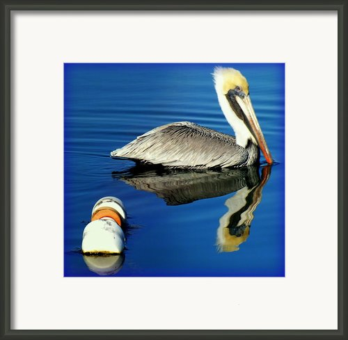 Blues Pelican Framed Print By Karen Wiles