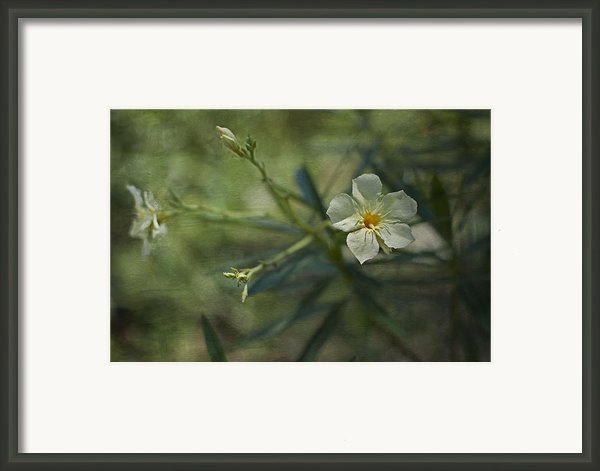... Framed Print By Mario Celzner
