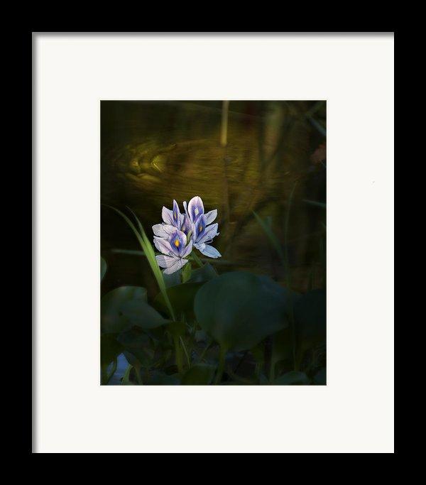 ... Framed Print By Mario Celzner