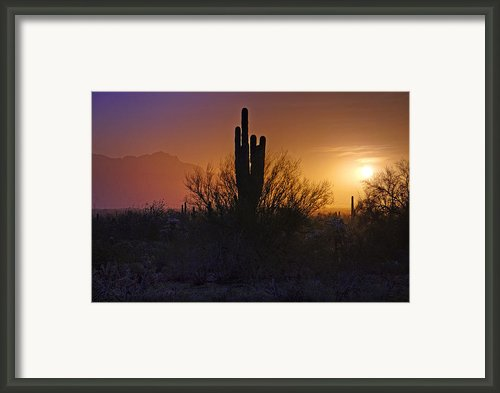 A Sonoran Morning  Framed Print By Saija  Lehtonen