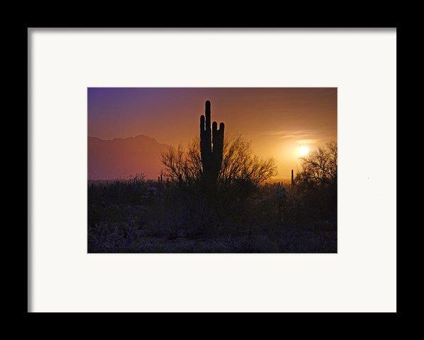 A Sonoran Morning  Framed Print By Saija  Lehtonen
