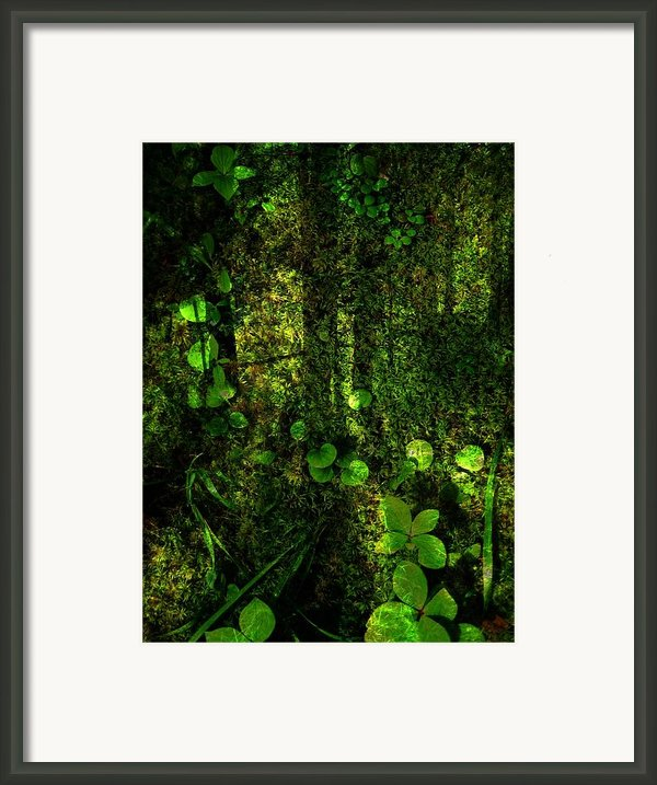 An Earthy Place Framed Print By Shirley Sirois