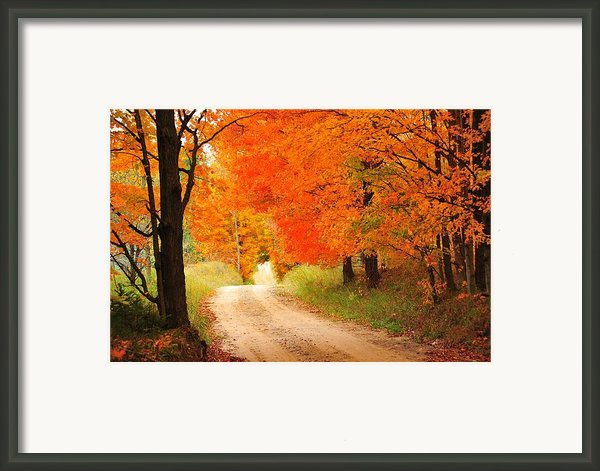 Autumn Trail Framed Print By Terri Gostola