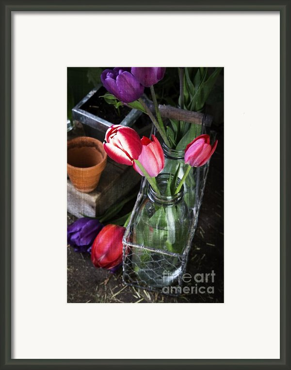 Beautiful Spring Tulips Framed Print By Edward Fielding