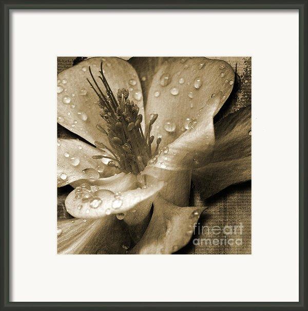 Beauty Ii Framed Print By Yanni Theodorou