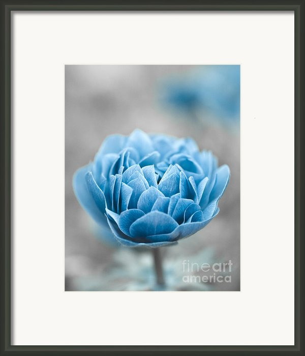 Blue Flower Framed Print By Frank Tschakert