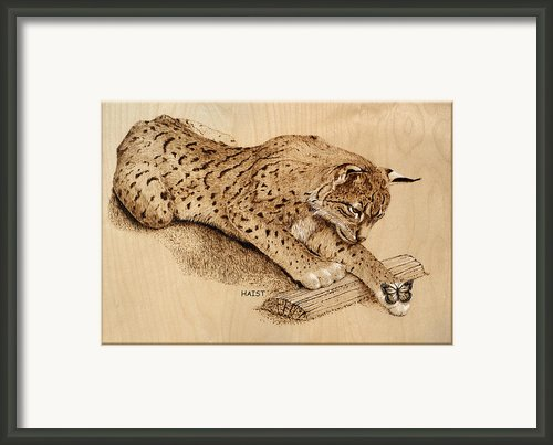 Bobcat Framed Print By Ron Haist