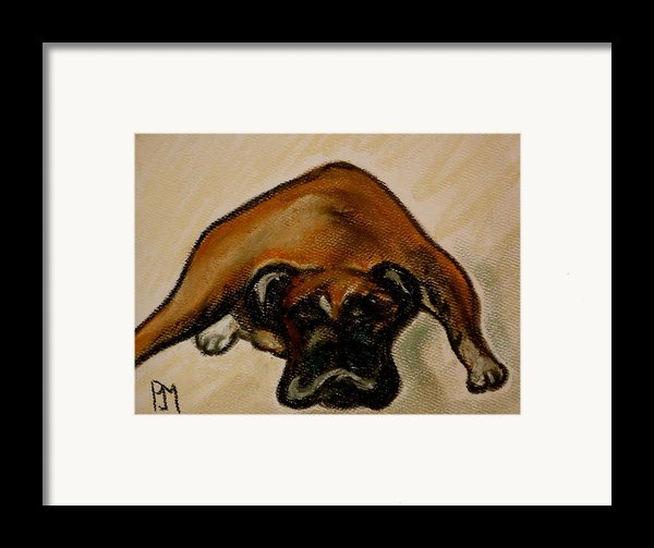 Boxer Down Framed Print By Pete Maier