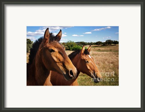 Breed Of Horses Framed Print By Carlos Caetano