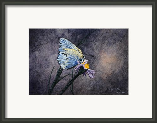 Butterfly Framed Print By Bob Hallmark