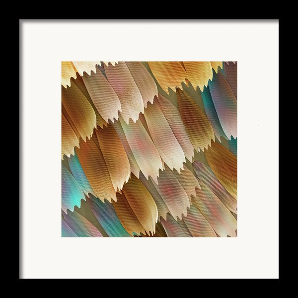 Butterfly Wing Scales Framed Print By Power And Syred