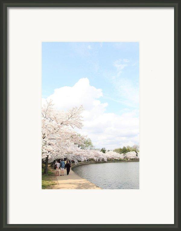 Cherry Blossoms - Washington Dc - 01131 Framed Print By Dc Photographer