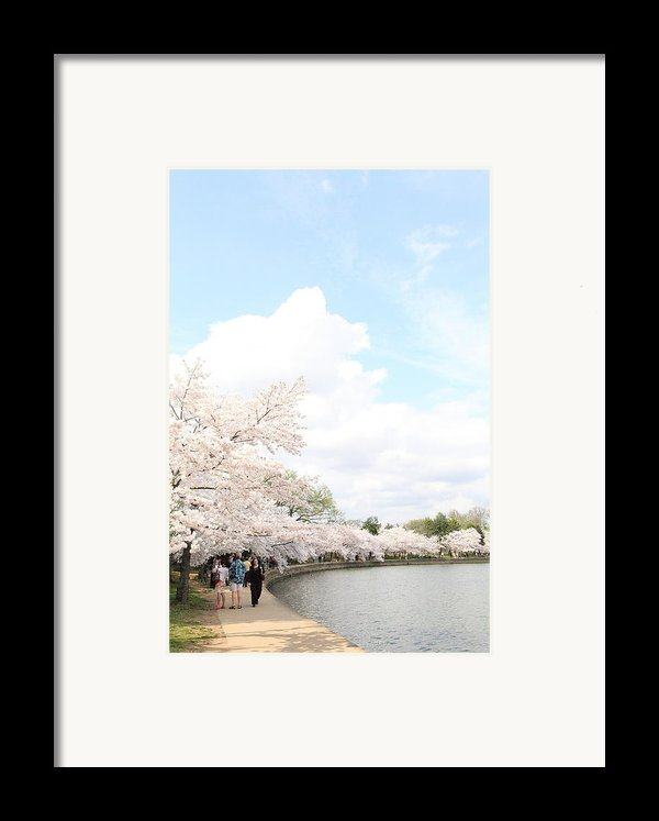 Cherry Blossoms - Washington Dc - 01131 Framed Print By Dc Photographer