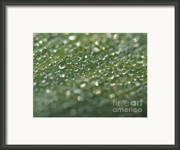 Drops On The Leaf Framed Print By Odon Czintos