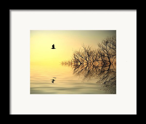 Dusk Flight Framed Print By Sharon Lisa Clarke