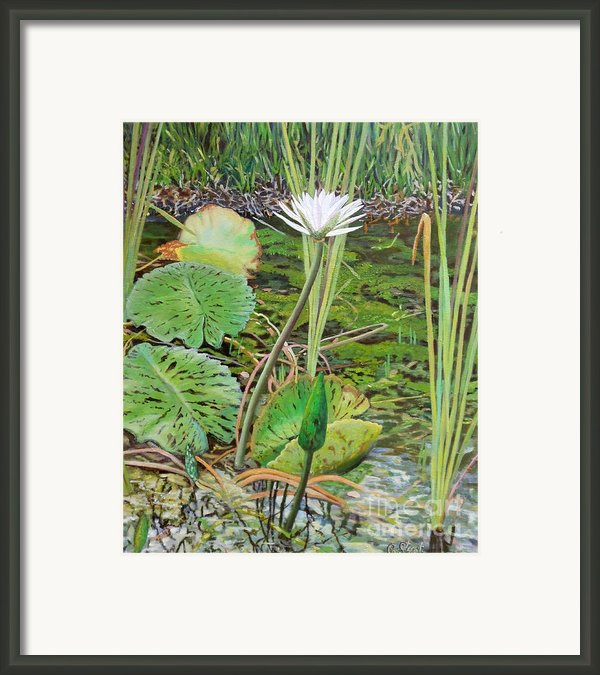 Emerald Lily Pond Framed Print By Caroline Street