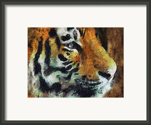 Eye Of The Tiger Framed Print By Zeana Romanovna