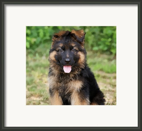 German Shepherd Puppy Framed Print By Sandy Keeton