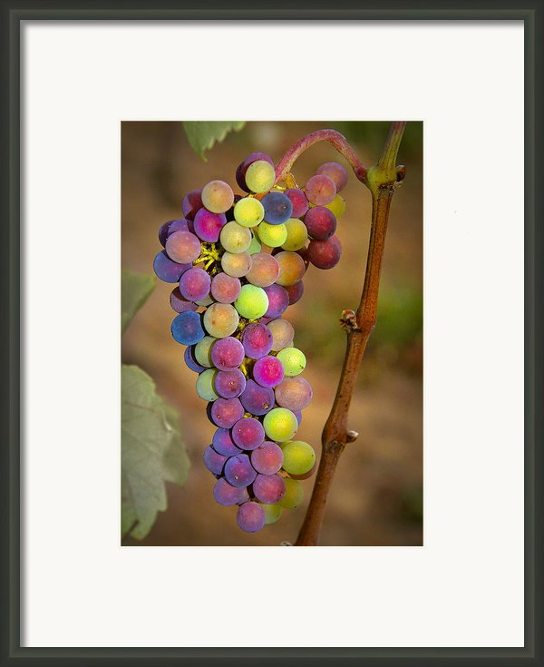Jewel Tones Framed Print By Jean Noren