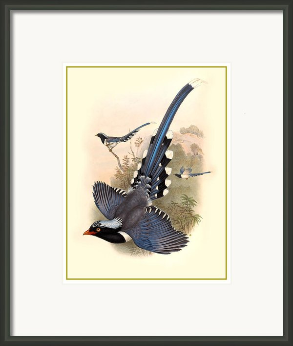 John Gould Birds Framed Print By Gary Grayson