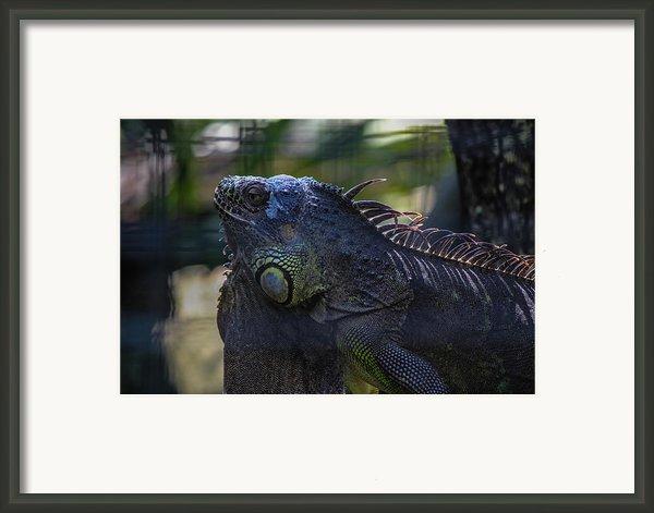 Just Chillin Framed Print By Lesley Brindley