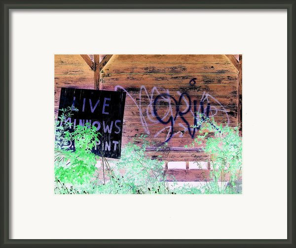 Live Minnows Framed Print By Dietrich Ralph  Katz
