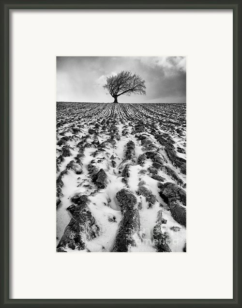 Lone Tree Framed Print By John Farnan