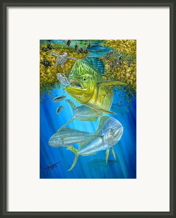 Mahi Mahi Hunting In Sargassum Framed Print By Terry  Fox