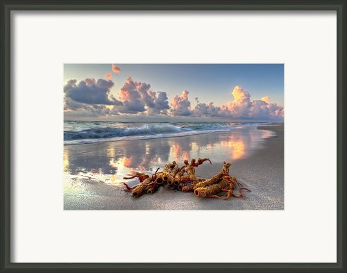 Morning Surf Framed Print By Debra And Dave Vanderlaan