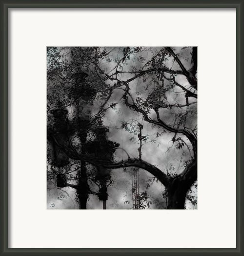 Mortal Coil Framed Print By David Fox