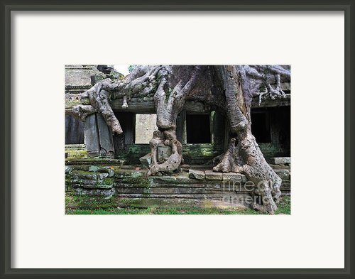 Strangler Fig Tree Roots On Preah Khan Temple Framed Print By Sami Sarkis