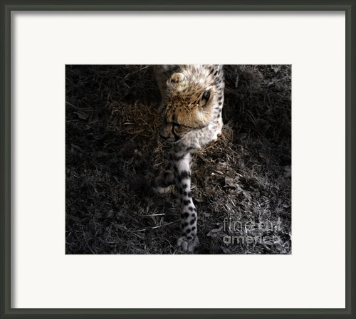 The Catwalk  Framed Print By Steven  Digman