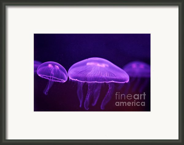 Towards The Light Framed Print By Artist And Photographer Laura Wrede