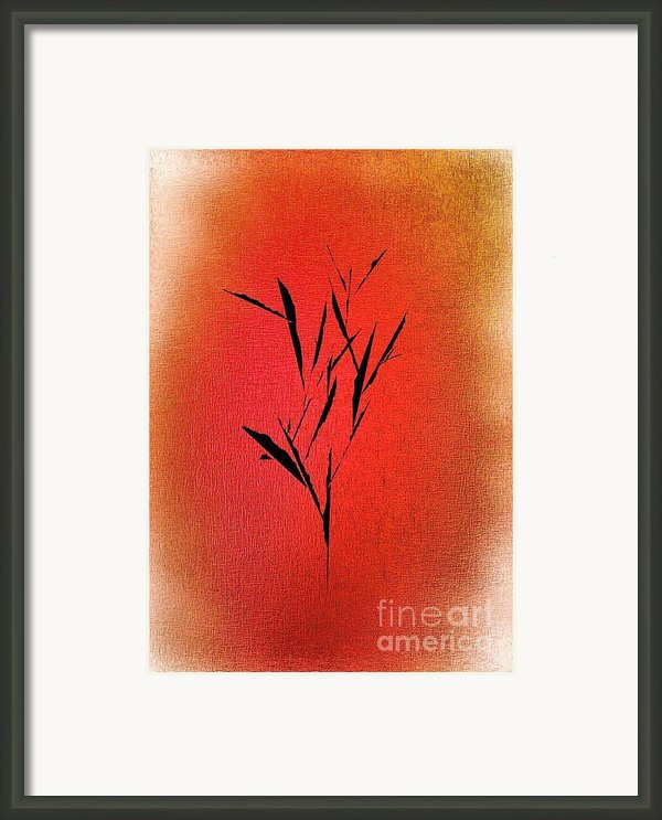 Tree Framed Print By John Krakora