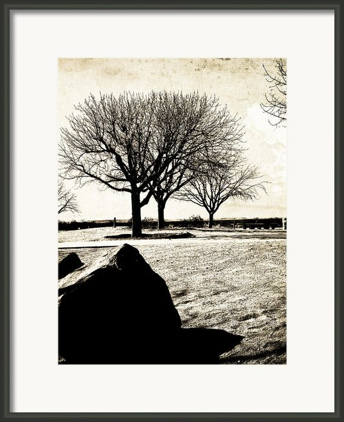 Tres Trees Framed Print By Gilbert Artiaga