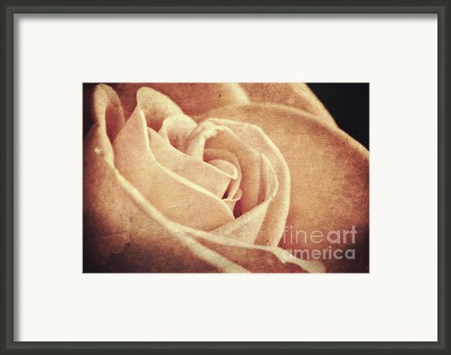 Vintage Rose Framed Print By Mythja  Photography