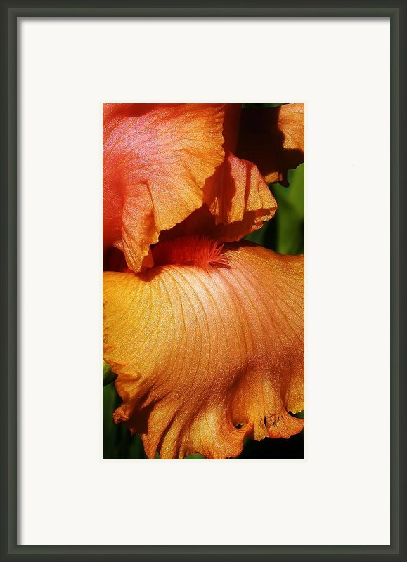 Waves Of Petals Framed Print By Bruce Bley