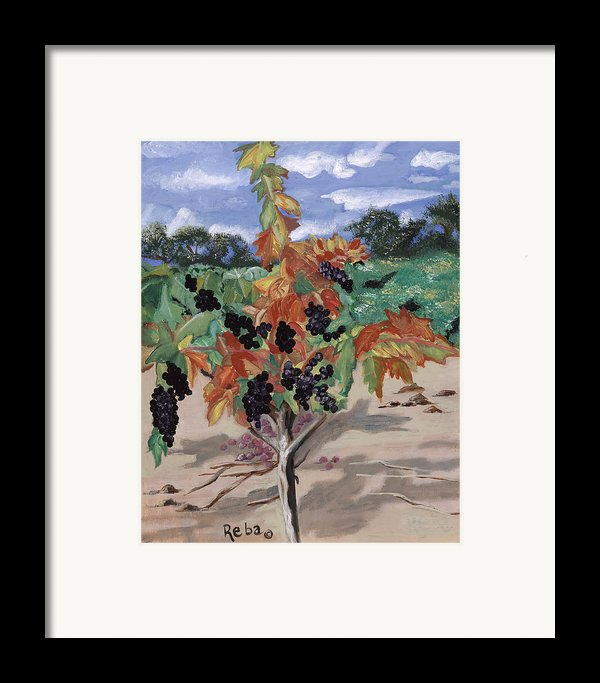 Wine Country Framed Print By Reba Baptist