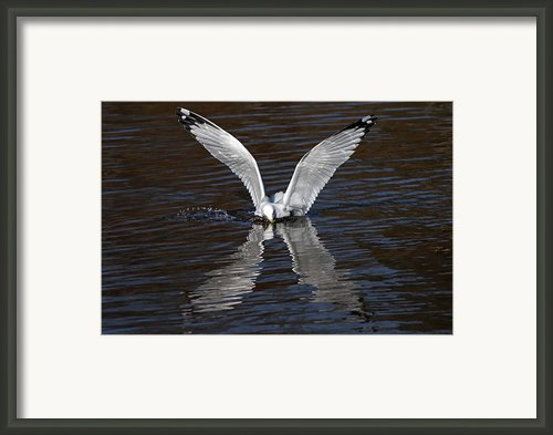 X Framed Print By Jim Nelson