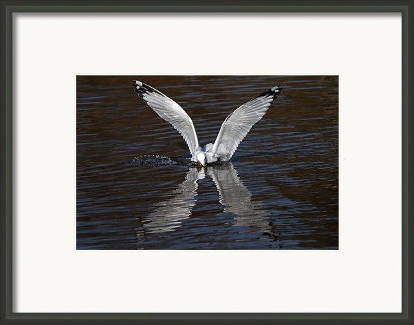 X Framed Print By Jim Nelson