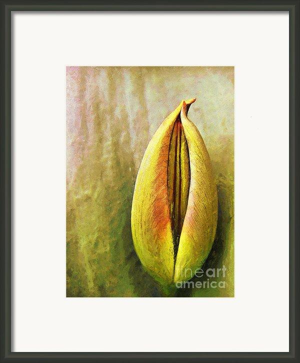 Tulip Framed Print By Odon Czintos
